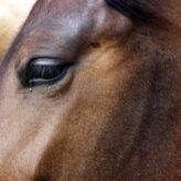 Anatomie koně
