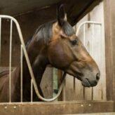 Dotace na koně