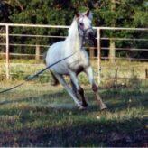 Lonžování koně