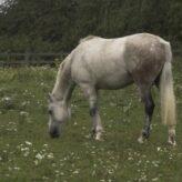 Nálevky u koní