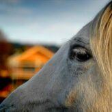 Koně – obrázky