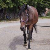 Obsedání koně
