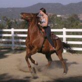 Povely pro koně