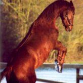 Sarkoidy u koní