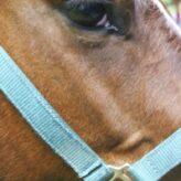 Útulek pro koně
