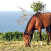 Vitamíny pro koně